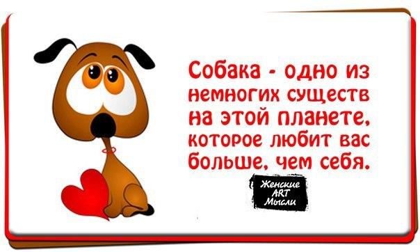 http://cs406925.userapi.com/v406925794/3b2e/QwzwwI0mKho.jpg