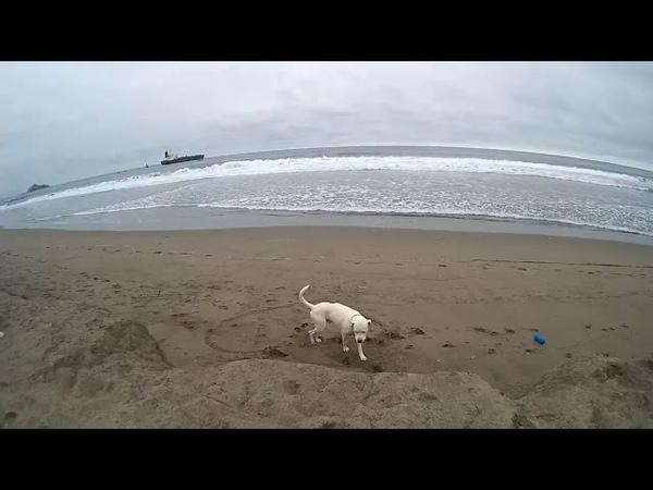 Adventurous Dog - Kataro En La Playa Con Su Amigo Betoven