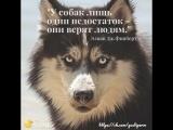 Цитаты про собак