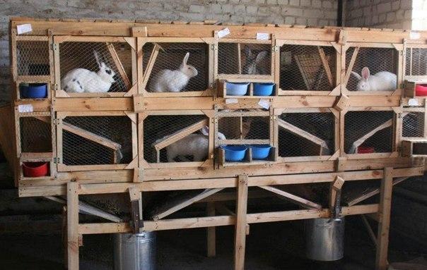 Выращиваем кроликов на частном подворье.