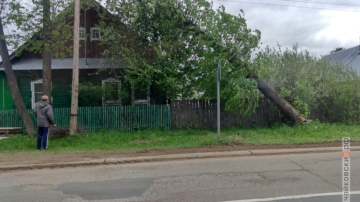 дерево, ураган, дом, Чайковский, 2018 год