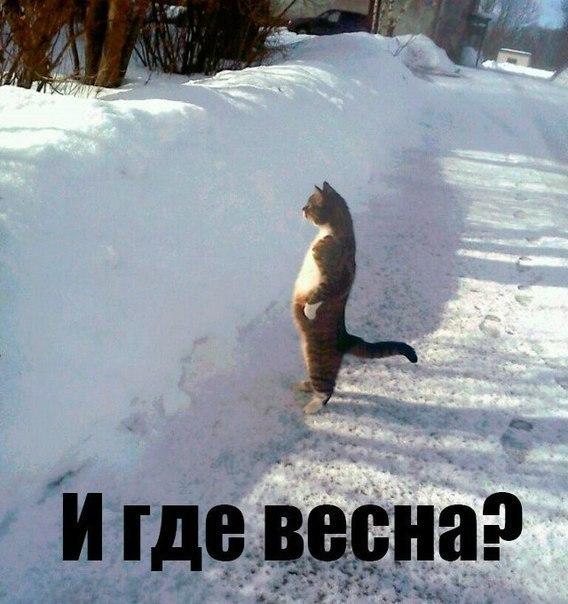 http://cs14111.vk.me/c7005/v7005856/211f/ZA9ypAXumhc.jpg