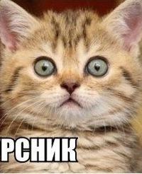 Мур Мур, 10 апреля 1991, Мурманск, id224428872