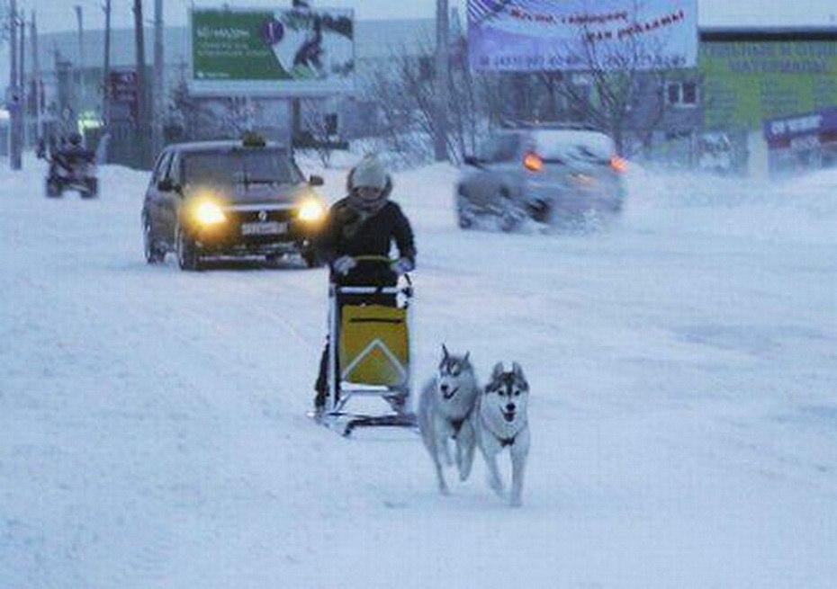 В Ростове горожане пересели на собачьи упряжки