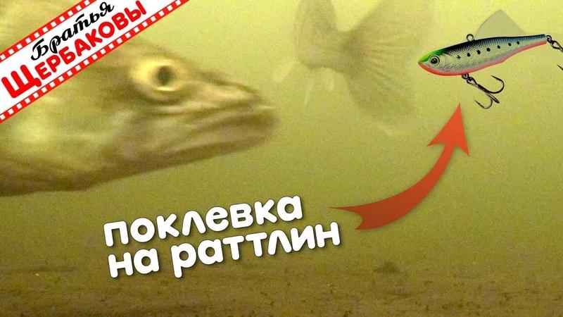 СУДАК как собака гоняется за РАТТЛИНОМ Подводные съемки Зимняя рыбалка Братья Щербаковы
