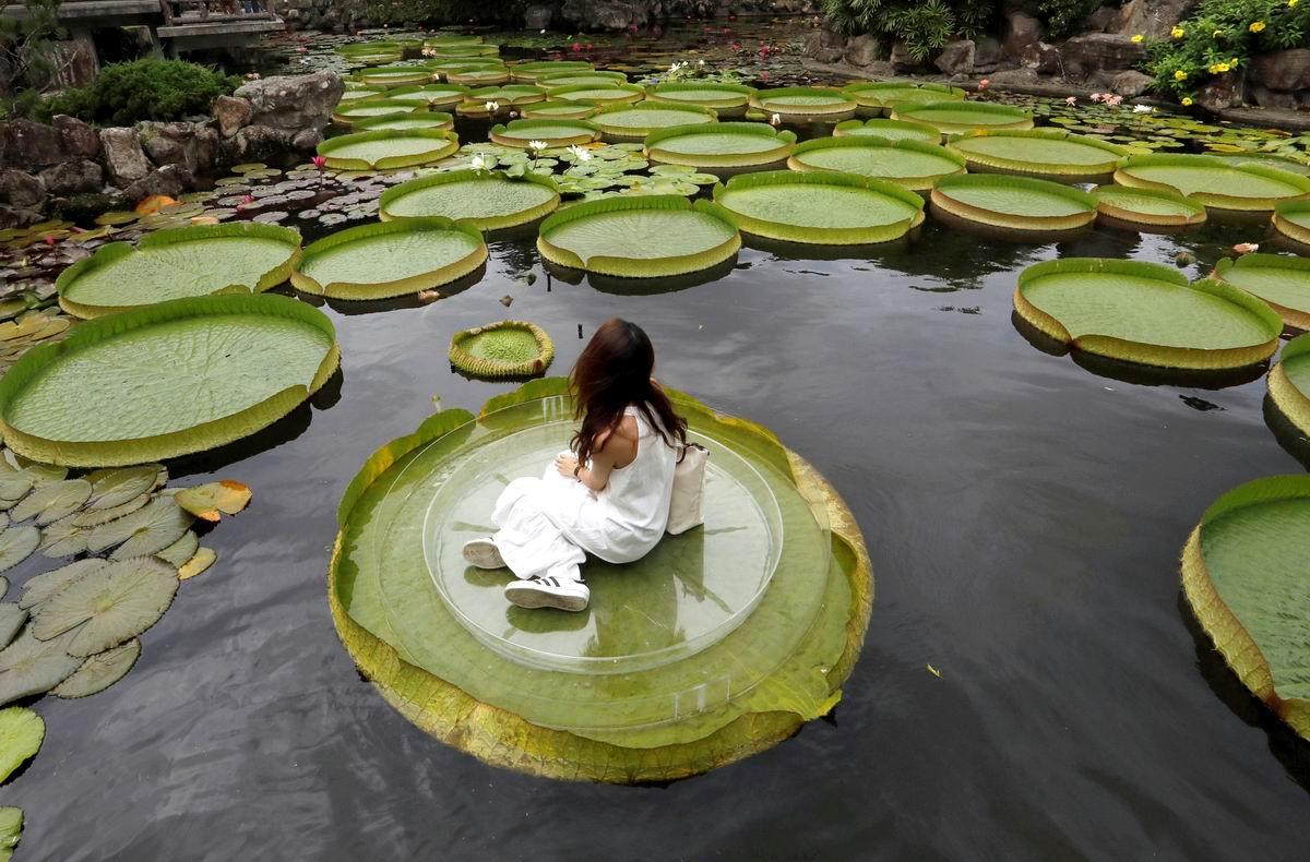 В царстве гигантских кувшинок: Тайваньская романтика