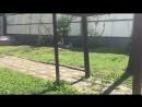 джекрасселтерьер щенки питомник АзартПогони