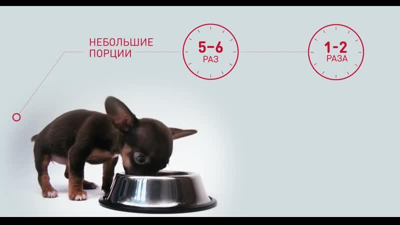 Сомнение №2 Как правильно кормить щенка