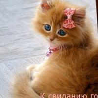 Lusi Dzordz, 9 мая 1999, Чугуев, id221268355