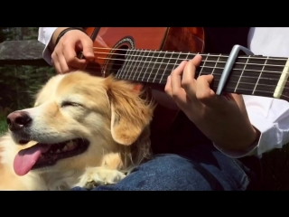See You Again - Wiz Khalifa ft. Charlie Puth (Trench Fingerstyle).mp4