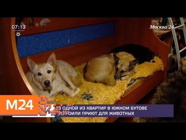 В одной из квартир в Южном Бутове устроили приют для животных - Москва 24