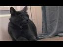 Моя адская кошка Ларри