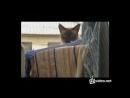 Кот-бетмен 360p.mp4