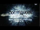 BBC После заката. Мир ночной природы. Серия №2 (2012)