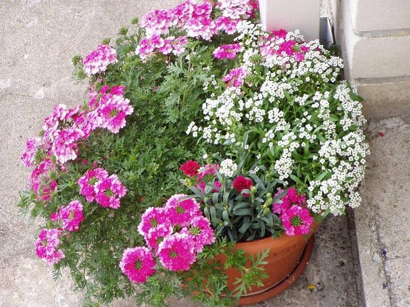 Семь правил выращивания растений в контейнерах