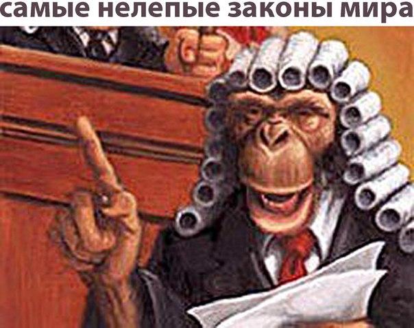 Нелепые законы США - Фото - Калейдоскоп Эмоций