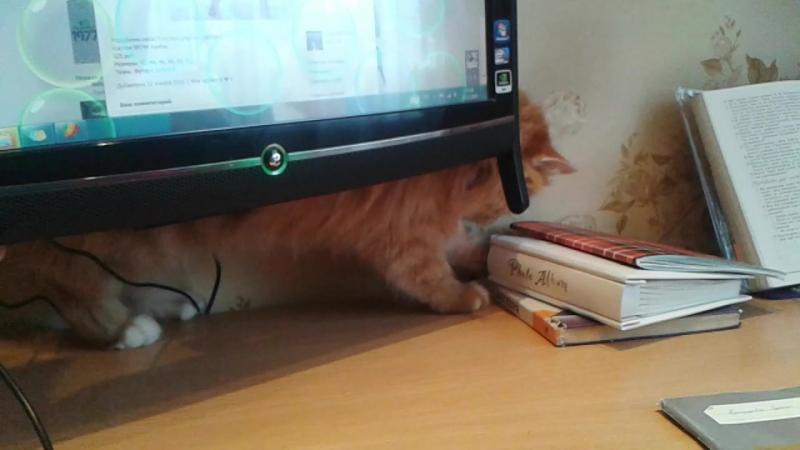 Кошка Ясмина