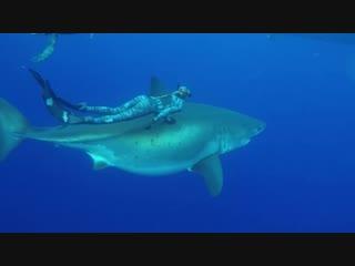 Дайверы встретили гигантскую белую акулу
