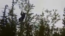 Крокодилы и Медведь на дороге Онега-Архангельск