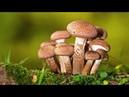 В лес по грибы 8 сент 2018г Полный лес грибовЕле унесли!1 часть