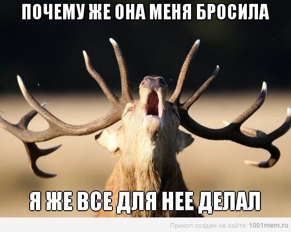 http://cs402419.vk.me/v402419525/f235/hlcY7B-tlQA.jpg