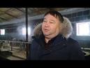 21 02 2019 Умная ферма: в Граховском районе Удмуртии показали современное животноводческое хозяйство