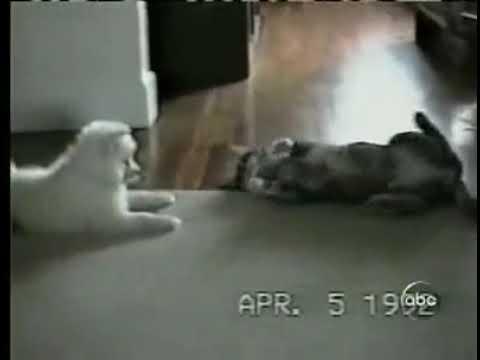 Кот дрессирует собаку
