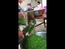 гифки-кухня-зелень-гильотина