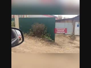 Незваный гость в Кулебакском районе - кабан прибежал к людям- Типичный Нижний Новгород