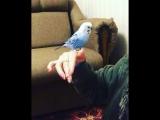 Что ещё делать в половина второго ночи?! Разговаривать с попугаем!?