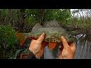 Хитрая рыбалка на севере окуня по локоть