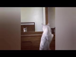 Кот любуется на себя в зеркале