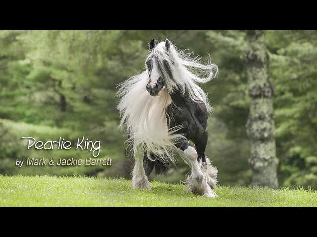 Pearlie King 2013