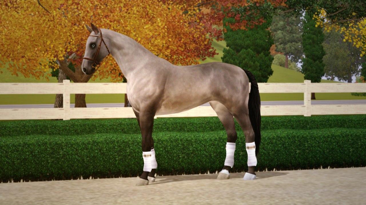 Регистрация лошадей в RHF 1.1 - Страница 5 06bmHAznb-M