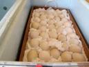Мускусные утки. Закладка яиц в инкубатор Блиц Норма.