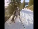 Цыганский лыжник