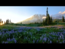 4K Relaxation 3-hour Loop Video - Wild Flowers of Mount Rainier with Nature Soun