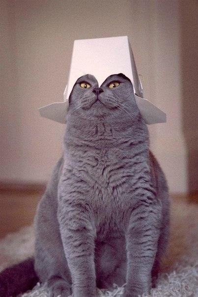 Как сделать из кота императора всея квартиры… (1 фото) - картинка