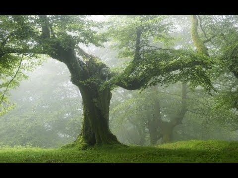 Магические свойства деревьев. Уроки колдовства 87