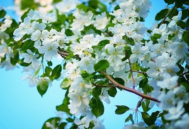 Spring time ... - Pagina 2 YbJ_73igQMY