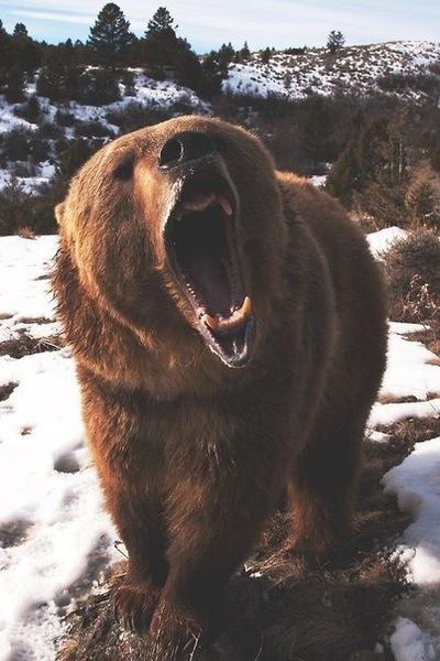 Lonely Wolf, 9 января , Одесса, id225931526