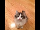 Kitten Says Hi Vine By: Jay Tucker Hill