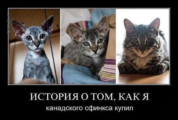 Юмор в картинках ROHql_ToRvM