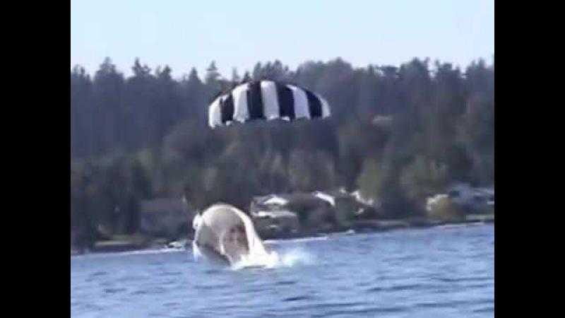 Most shocking Paragliding Crashes ever