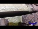 Щенок в бетонных тисках
