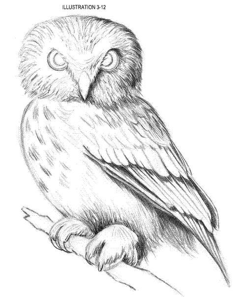 сова рисунок карандашом: