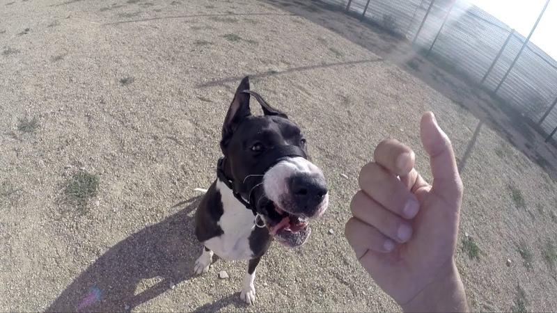 Как контролировать собаку без поводка один из способов