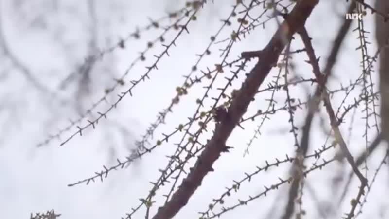 Тима Белорусских - Незабудка ( Клип 2018)
