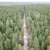 Остановим вырубку хвойного леса в Заречье