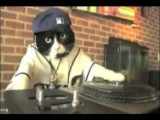 DJ Kitteh featuring. Schatrax -- Loops And Samples.